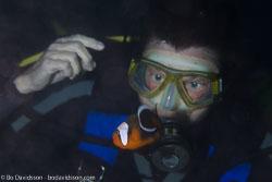 BD-110318-Puerto-Galera-4013-Amphiprion-polymnus-(Linnaeus.-1758)-[Saddleback-clownfish].jpg